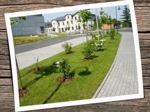 Grünflächenpflege_2